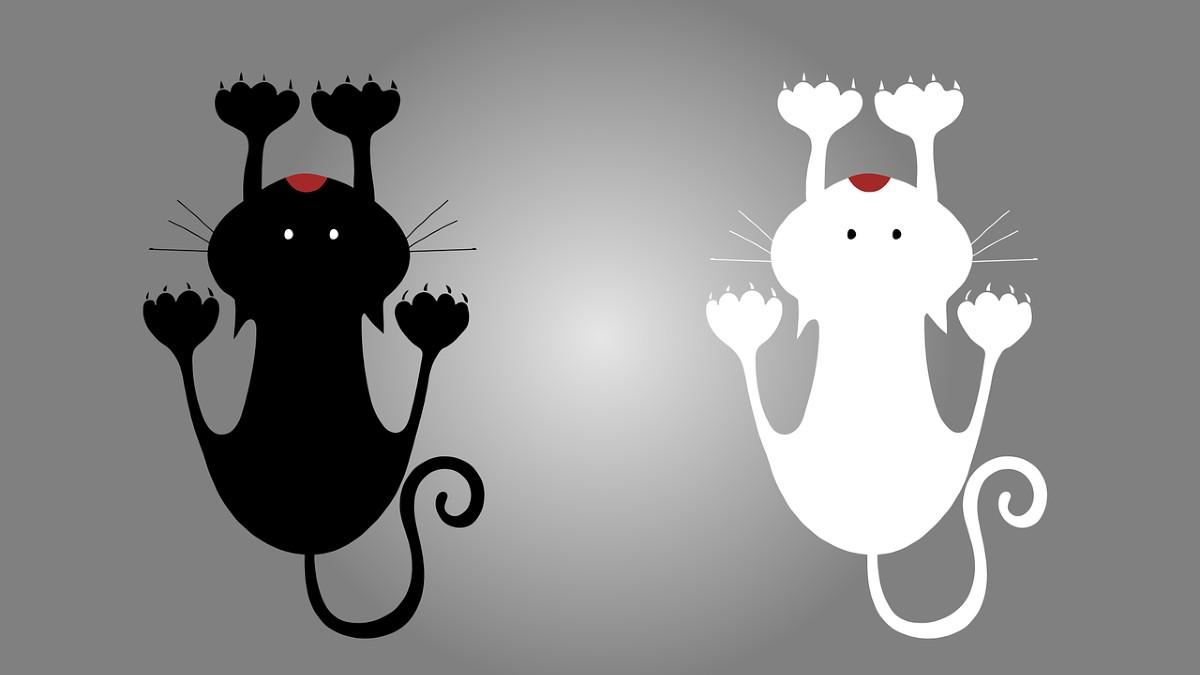 Gatto nero gatto bianco